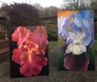 - Iris Rot und Blau Acryl Tempera Gouche Sara Heinrich Fine Art