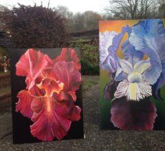 Iris Rot und Blau Acryl Tempera Gouche Sara Heinrich Fine Art
