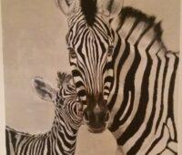 - Zebra 120x100