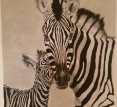 Zebra 120x100