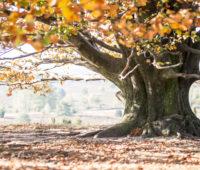 - Unterm Herbstbaum