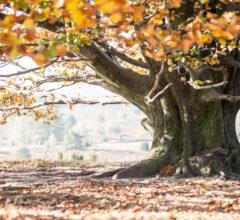 Unterm Herbstbaum