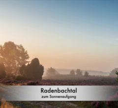 Lüneburger Heide - Fotos der Heideblüte 2019